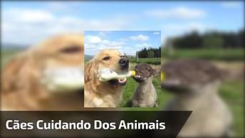Cães Cuidando De Outros Animais, Como Não Amar Esta Especie Cheia De Amor!
