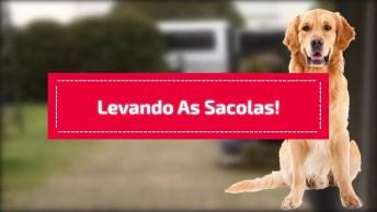 Cães Da Raça Golden Retriever Ajudando A Levar As Compras Pra Dentro De Casa!
