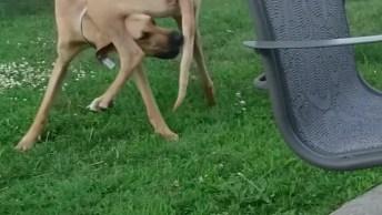 Cães De Grande Porte Que São Muito Engraçados, Olha Só O Que Eles Aprontam!