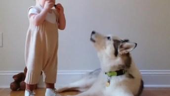 Cães E Bebês Uma Combinação Que Vão Arrancar Sorrisos De Você!