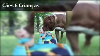 Cães E Crianças Uma Combinação Pra La De Perfeita, Olha Só Quanto Amor!