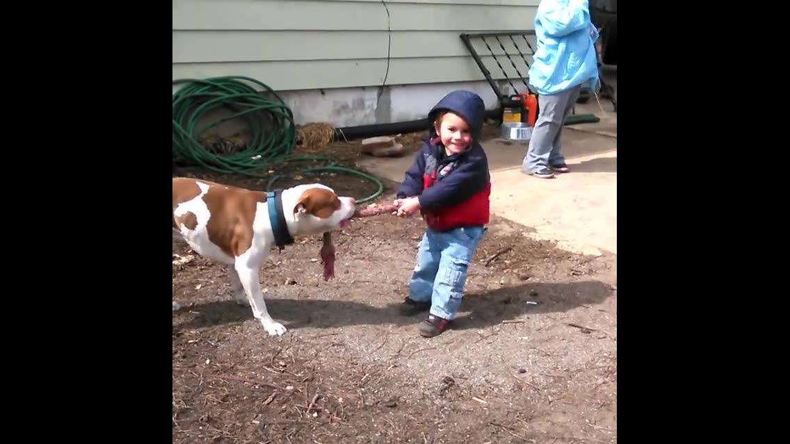 Cães e crianças uma mistura mais que perfeita, vale a pena conferir!!!