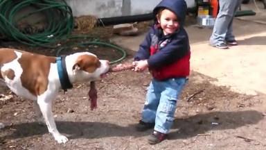 Cães E Crianças Uma Mistura Mais Que Perfeita, Vale A Pena Conferir!