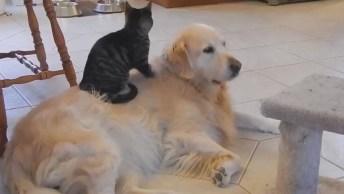 Cães E Gatos, Um Eterno Amor E Ódio, Hahaha! Como É Legal Observa-Los!
