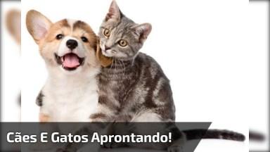 Cães E Gatos Uma Combinação Pra La De Engraçada, Olha Só Esta Galerinha!
