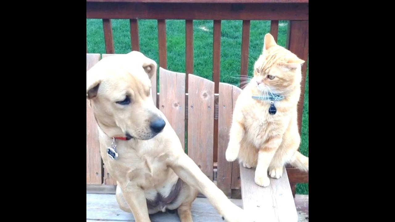 Cães e gatos, uma mistura de amizade e brigas
