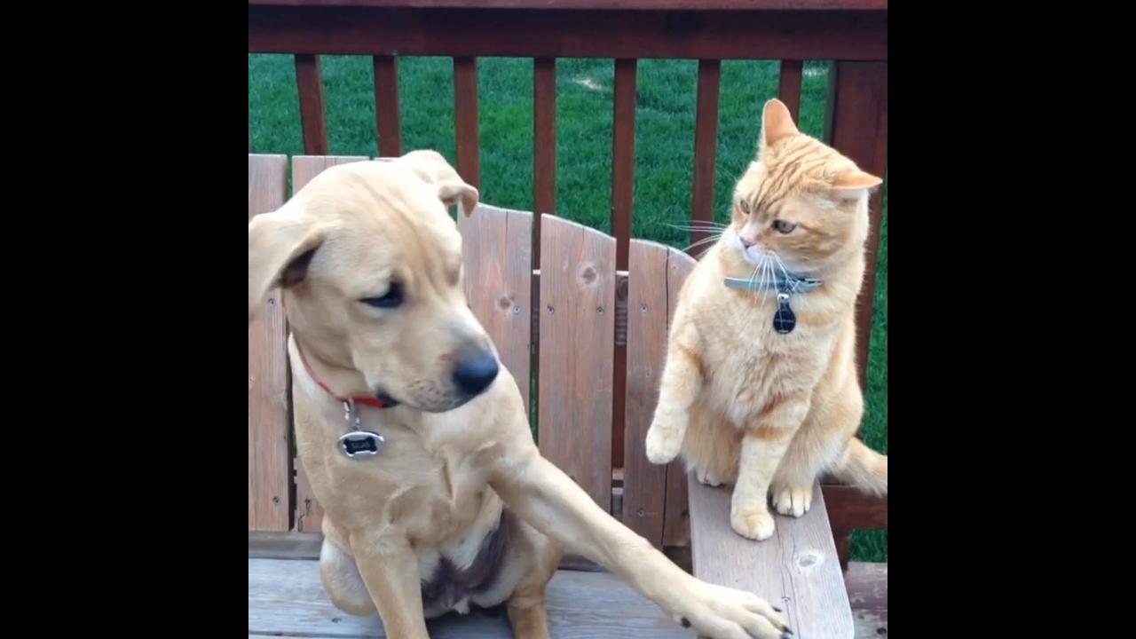 Cães e gatos uma mistura de amor e ódio
