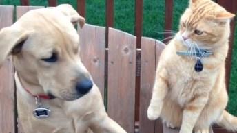 Cães E Gatos Uma Mistura De Amor E Ódio, Este Vídeo É Muito Legal!