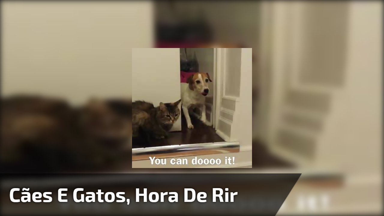 Cães e gatos, hora de rir