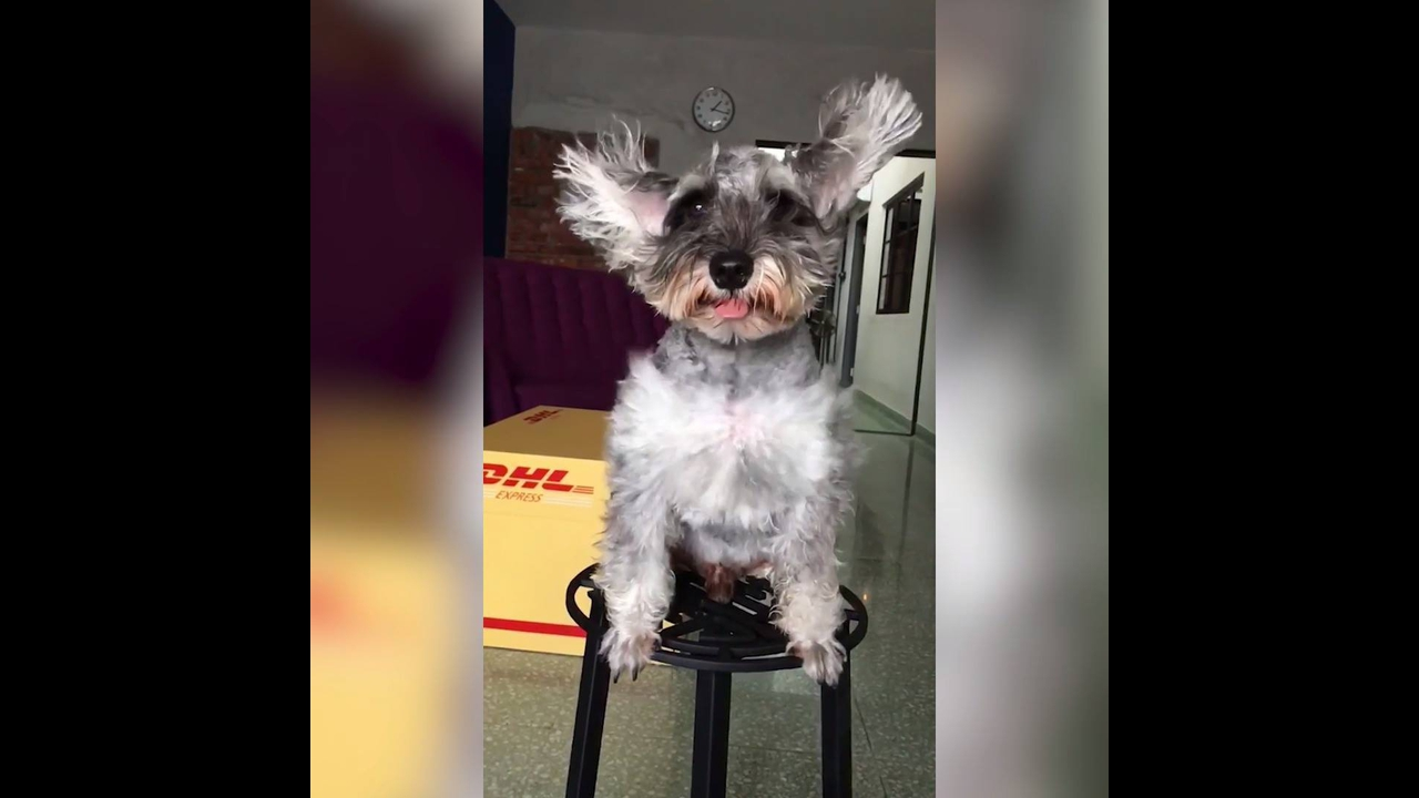Cães e sua pelagem em câmera lenta