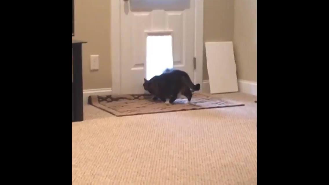 Cães em situações engraçadinhas