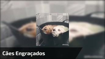 Cães Em Situações Muito Engraçadas, Veja O Que Estes Amiguinhos Aprontam!
