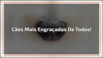 Cães Mais Engraçados Que Você Já Viu, É Cada Situações Que Eles Se Metem!