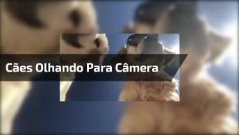 Cães Olhando Para Câmera No Chão, Olha Só A Carinha Deles!