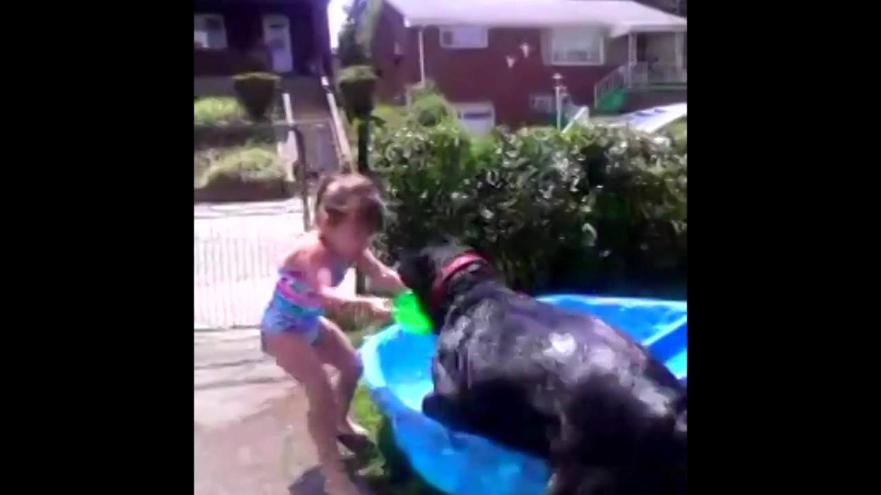 Cães os melhores amigos, olha só como eles são amorosos