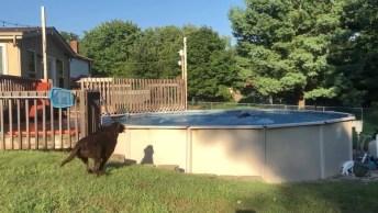 Cães Pulando Na Piscina, Olha Só Como Eles Gostam De Água!