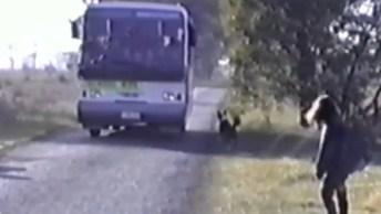 Cães Que Ficam A Espera De Seus Donos Chegando No Ônibus Escolar!