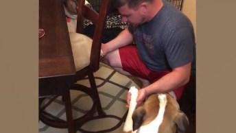 Cães Que Só Comem Depois De Ouvir A Palavra Amém, Olha Só Que Lindinhos!