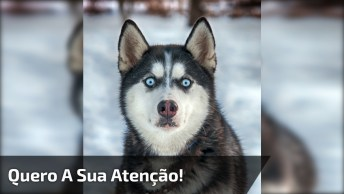 Cães Querendo Atenção De Todas As Formas Possíveis, É Muito Amor!