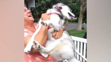 Cães Recebendo Seus Donos Depois De Muito Tempo Fora De Casa!