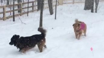 Cães Se Divertindo Na Neve, Olha Só Como Eles Estão Gostando!