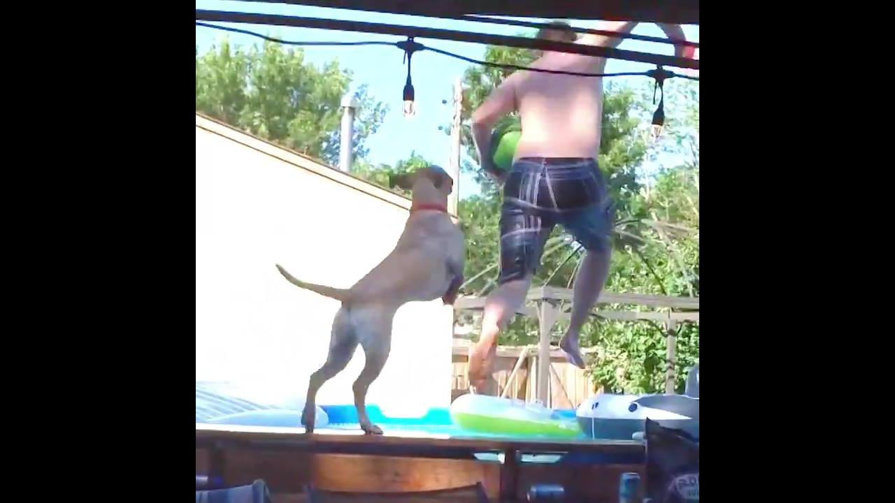 Cães se divertindo na piscina