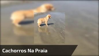 Cães Se Divertindo Na Praia E O No Mar, Como Eles Gostam, Confira!