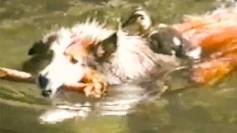 Cães Versus Esportes, Olha Só Que Inteligentes Estes Animais!