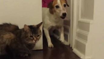 Cães Versus Gato, Uma Guerra Que Nunca Tem Fim, Como Não Amar Estes Amiguinhos!