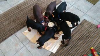 Cãezinhos Fofinhos Comendo Todos Juntos! É Muito Legal Essa Galerinha!