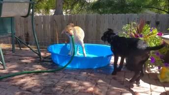 Cãezinhos Que Amam O Verão Para Poder Brincar Com Água, Olha A Festa!