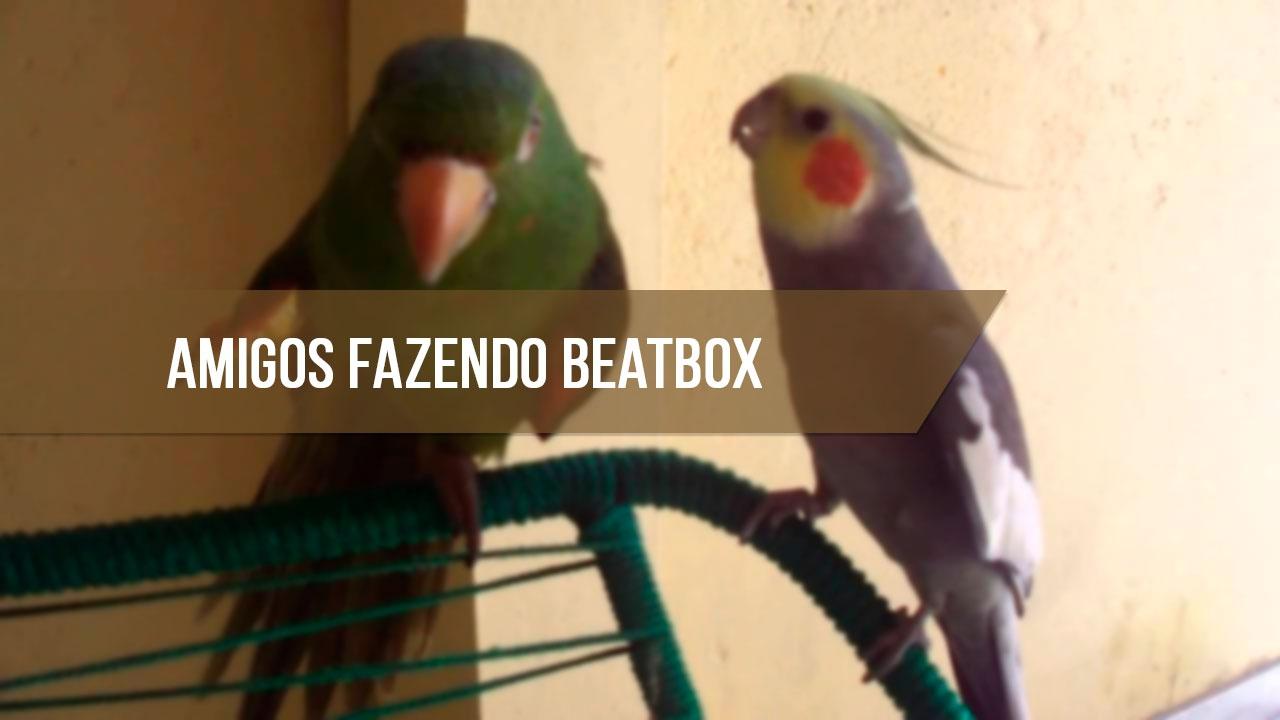 Calopsita fazendo beatbox com seu amiguinho papagaio