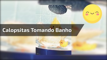 Calopsitas Tomando Banho, Olha Só A Alegria Delas, É Muito Lindinho!