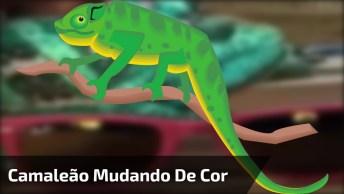 Camaleão Muda De Cor Toda Vez Que Toca Em Um Óculos De Cor Diferente, Confira!