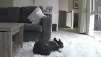 Câmera Escondida Flagra O Dia De Um Cachorro Sozinho Em Casa!