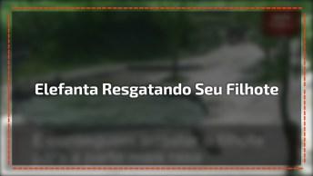 Câmeras De Segurança Flagram Mamãe Elefanta Ao Resgatando Seu Filhote!