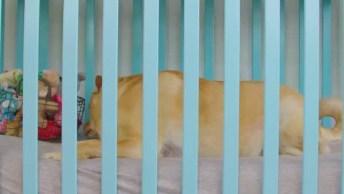 Caminha De Luxo Para Seu Cachorro, Olha Só Que Legal Esta Ideia!