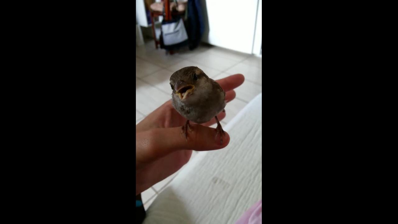 Cantando para um passarinho, até o bico ele abriu