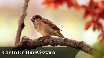 Canto De Um Pássaro, A Beleza Em Cada Ser Vivo, Nosso Planeta É Maravilhoso!