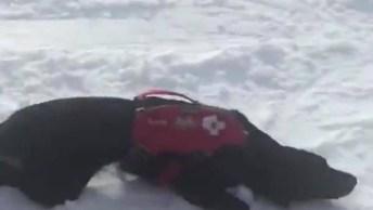 Cão De Resgate Se Divertindo Na Neve, Olha Só Que Aventureiro!