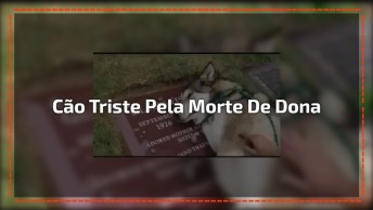 Cão Passa Mau Após O Enterro De Sua Dona, As Imagens São Emocionantes!