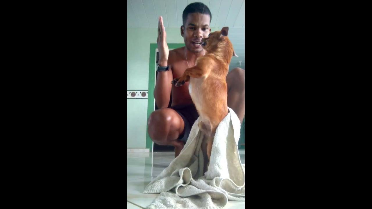 Cãozinho bravo não quer se secar após o banho
