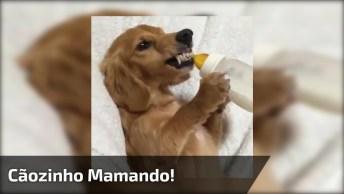 Cãozinho Mamando Em Uma Mamadeira, E Nem Pense Em Tira-La Dele, Kkk!