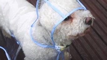 Capinha De Chuva Para Seu Dog, Olha Só Que Legal E Que Fofo!