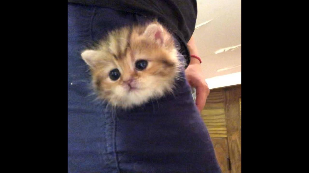 Carregando o gato no bolso