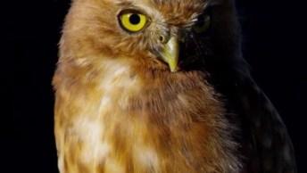 Caruja Linda Da Colômbia, Veja Que Olhos Mais Lindos Deste Animal!