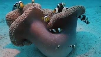 Casa De Peixes No Fundo Do Mar, Mais Um Vídeo Marinho Legal Para Compartilhar!
