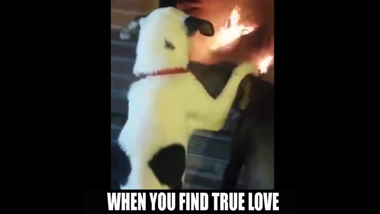 Casal de cachorro namorando na frente da lareira