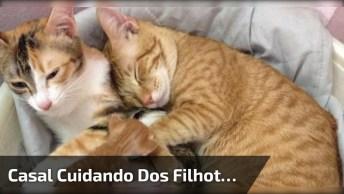 Casal De Gatos Cuidando Dos Filhotinhos, Veja Que Cena Linda!