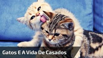 Casal De Gatos Representando Vida De Casados, Para Rir Muito E Compartilhar!